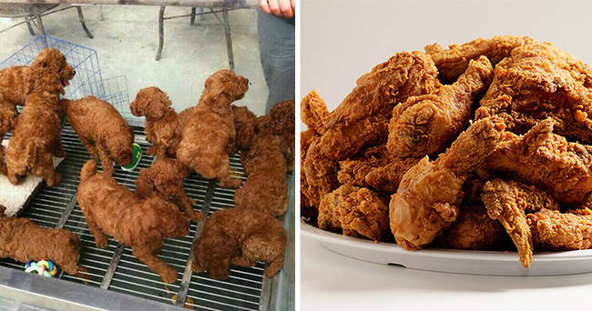 Puppies look like fried chicken.