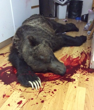 Conservation officers said the slain, 15-year-old grizzly had been in poor health. (Niki Traverse)