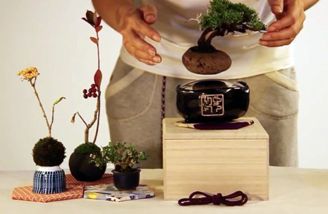 To get a full bonsai set, you need to at least pledge $200.