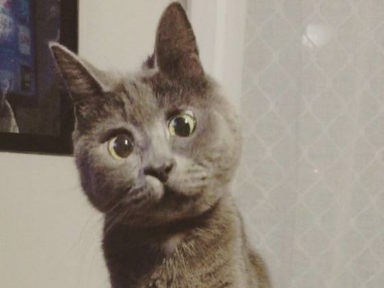 Kevin The Surprised Cat Is Full Of Surprises And Has Overcome All The Odds