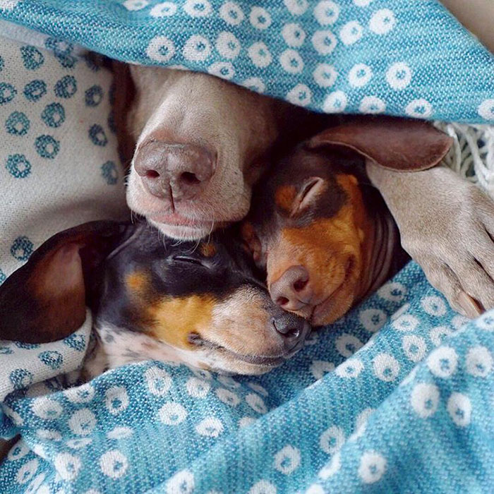 cute-dogs-sleep-together-best-friends-harlow-sage-indiana-reese-27