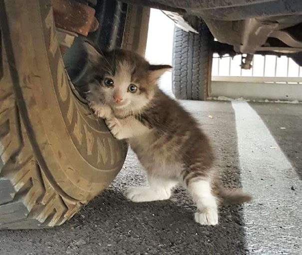 stray-kitten-found-under-truck-adopted-cat-axel-5