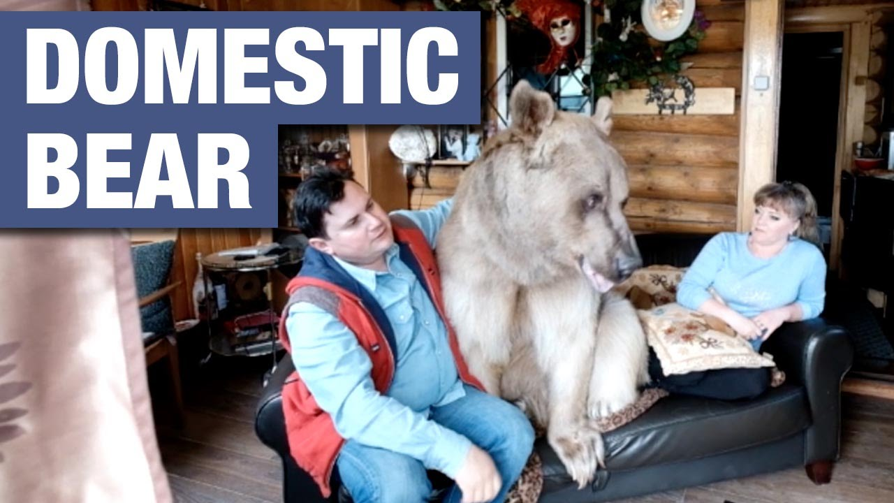 Russian Couple Live With A 7 Foot Tall Domesticated Bear