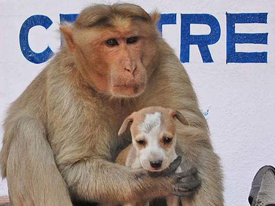 When This Monkey Adopted This Homeless Puppy As Its Child, It Proved Love Knows No Bounds!
