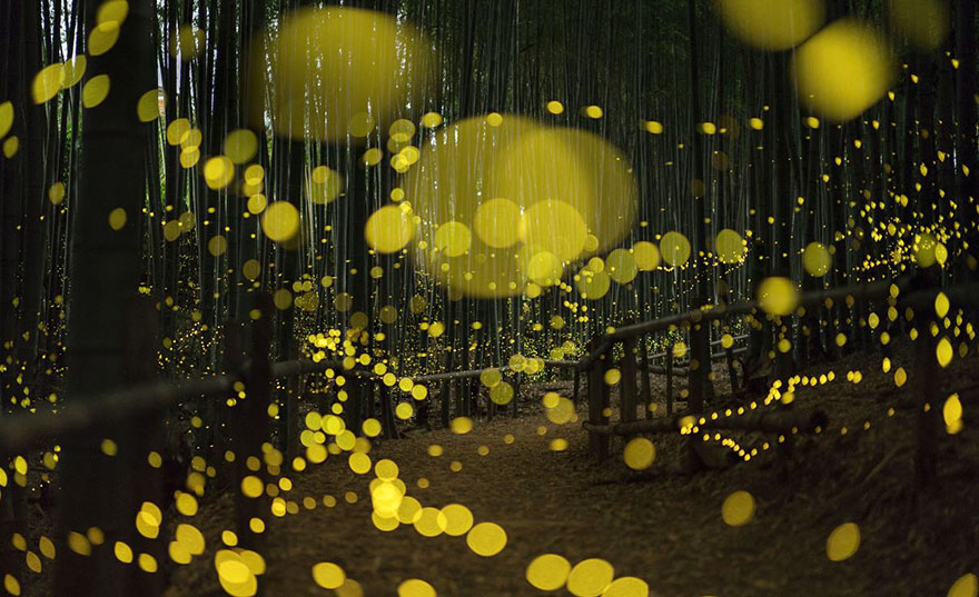 fireflies-long-exposure-photography-2016-japan-16