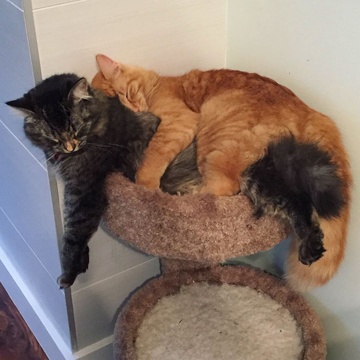 cats-sleeping-together-before-after-growing-up-renley-lili-11