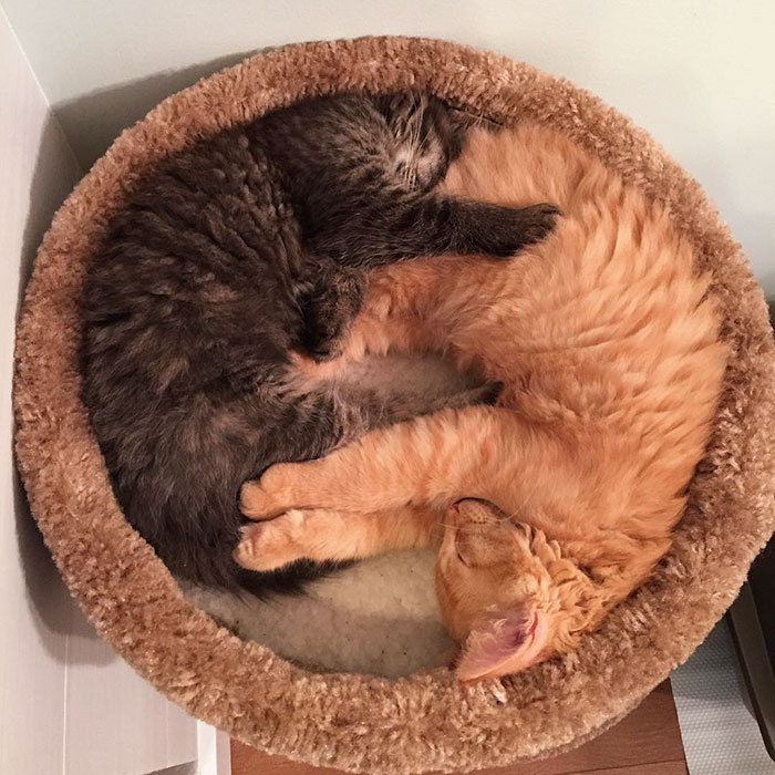 cats-sleeping-together-before-after-growing-up-renley-lili-12