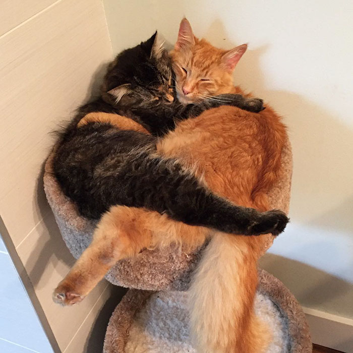 cats-sleeping-together-before-after-growing-up-renley-lili-9
