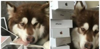 This Chinese Billionaire's Son Bought Eight iPhone 7's For His Dog