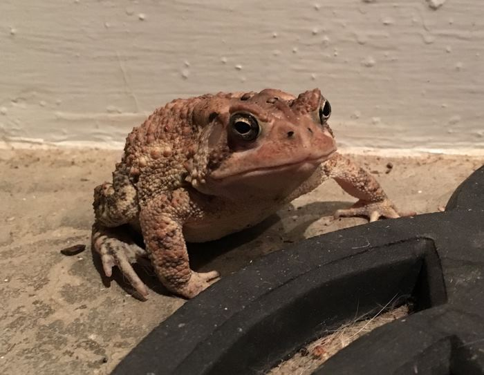 toad-tinny-hat-1