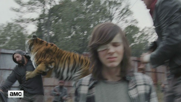walking-dead-tiger-man-seven-season-shiva-1