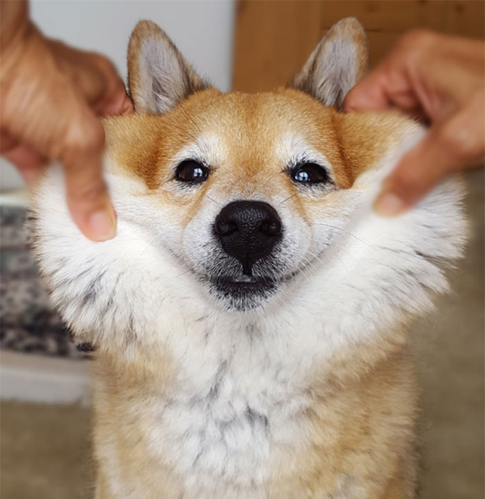 Squishy Dog Cheeks