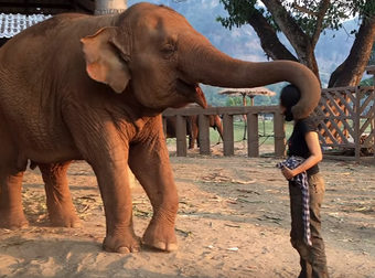 Watch Elephant Being Serenaded To Sleep With A Sweet Lullaby
