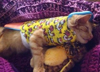 This Kitten Got Hit By A Car And Broke Many Bones, But Now He's Recovering Excellently In An Adorable Full Body Cast!