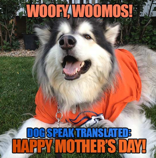 happy-dog-mom-day-meme-2-1557500366117.png