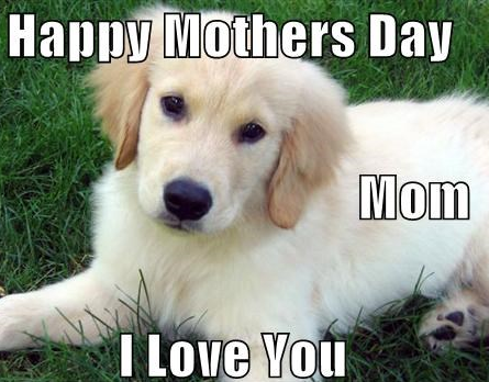 happy-dog-mom-day-meme-5-1557500386015.png