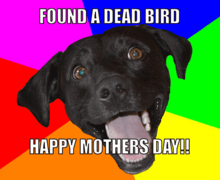happy-dog-mom-day-meme-8-1557500402844.png