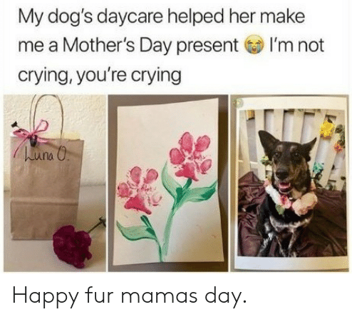 happy-dog-mom-day-meme-10-1557500414722.png