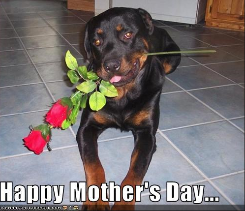happy-dog-mom-day-meme-1-1557500362701.png